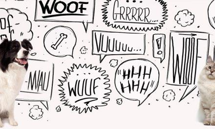 ¿Qué quiere decir tu mascota?