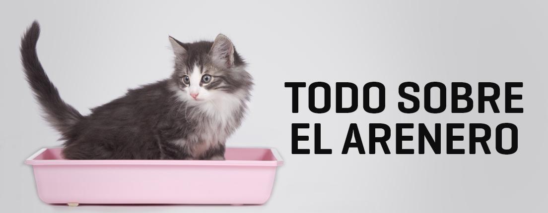 Consejos para que tu gato use el arenero