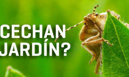Controla plagas en tu jardín