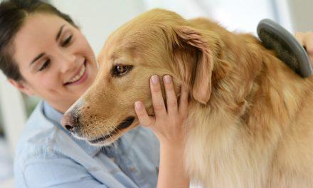 Cuida el pelo de tu mascota