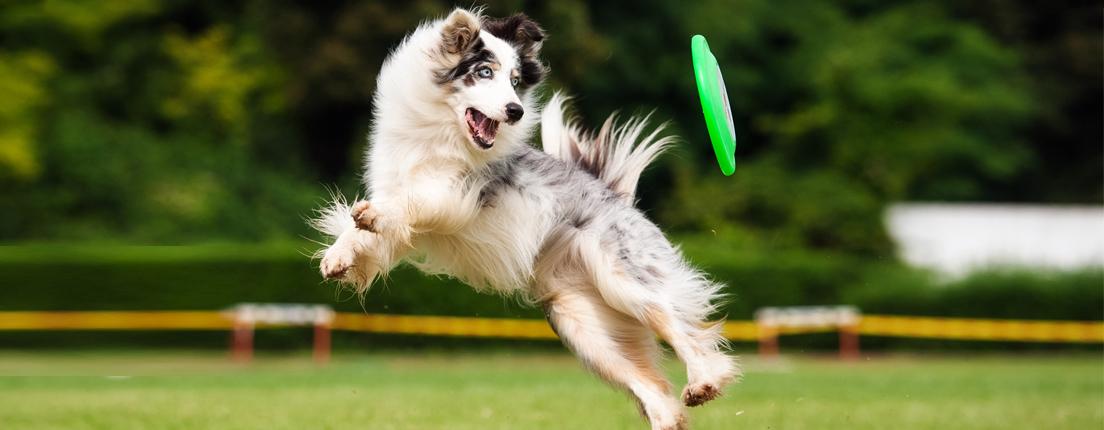 Perros en forma