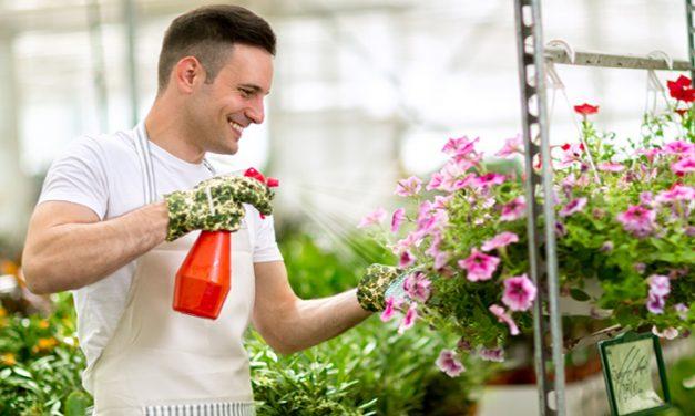 Consejos para eliminar las plagas de tu jardín