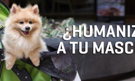 Tu mascota no es una persona