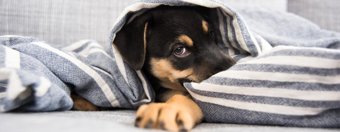 Tu perro también pasa frío