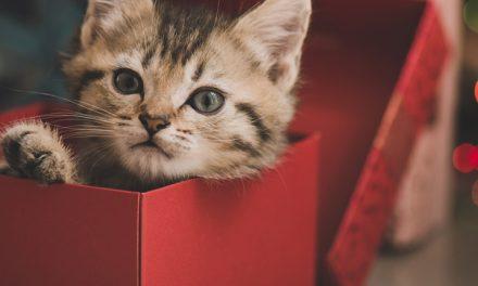 ¿Mascotas como regalo?