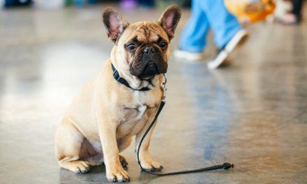 5 consejos para no perder a tu mascota