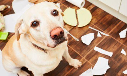 Pet alone: actividades para entretener a tu perro cuando no estás