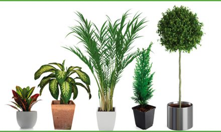 Plantas de interior y exterior en City Club