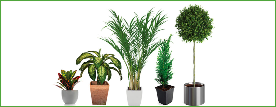 Plantas de interior y exterior en city club city life for Plantas exterior