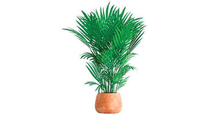 Planta de maseta