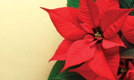 ¿Sabías esto de las Nochebuenas? – Diciembre City Club