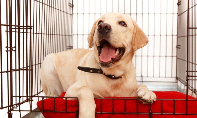 Un lugar seguro para tu perro