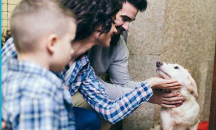 ¿Quieres adoptar un perro? Necesitas saber esto