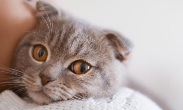 El kit para un felino feliz