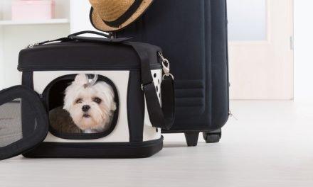 ¿Tu mascota viaja en transportadora?