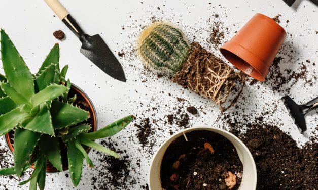 ¡Manos a la obra!, jardinería en el hogar