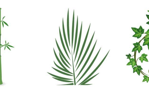 Purifica tu hogar naturalmente: con plantas