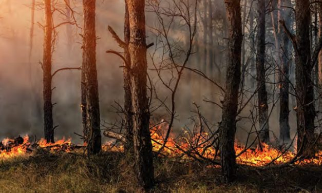 Prevenir incendios forestales ¡Sí se puede!