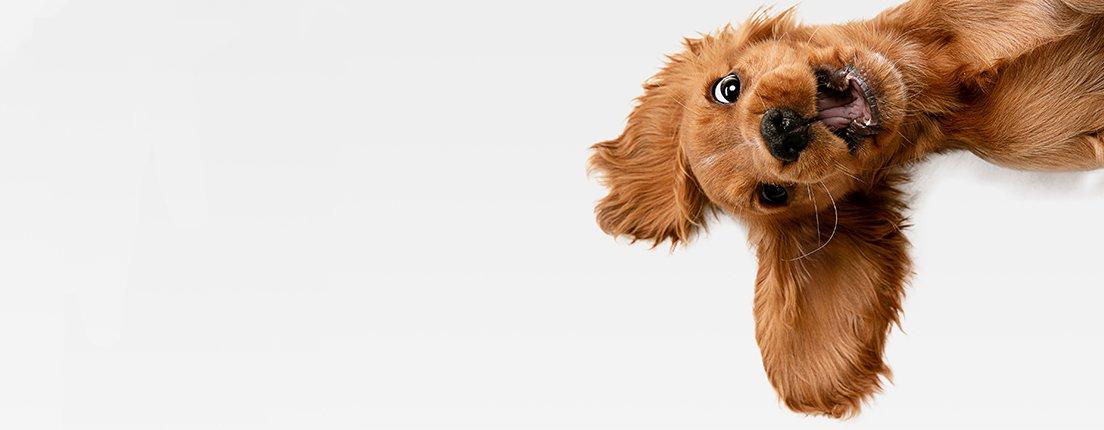 Día internacional del perro ¡Festéjalo como se merece!