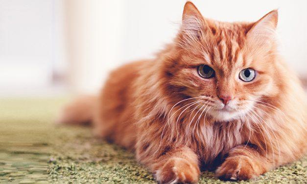 ¡Festeja el Día Internacional del Gato!